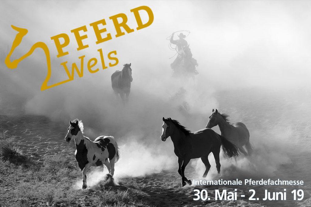 EXCA Extreme Cowboy Race Austria Blog Pferd Wels